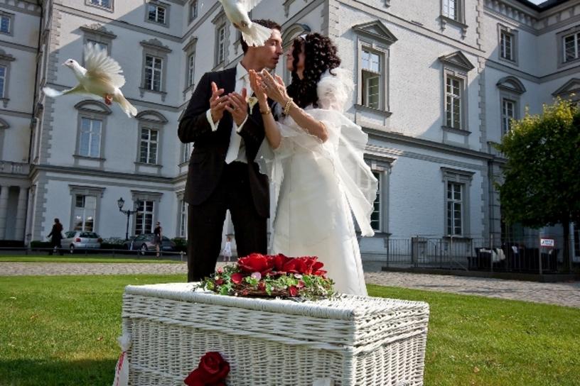 Hochzeitstauben Ein Immer Beliebterer Brauch Zur Hochzeit Wir